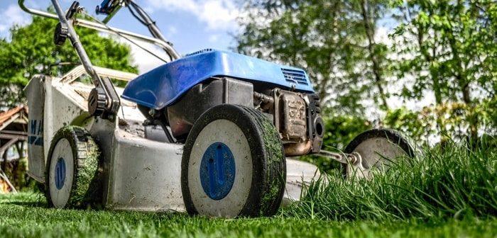 saison pour tondre la pelouse