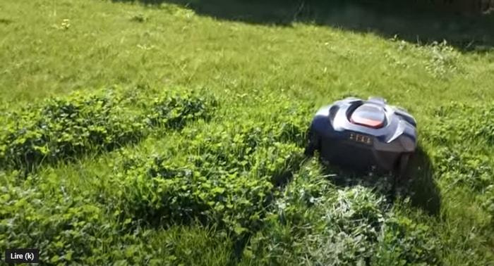 tondre la pelouse dès le printemps